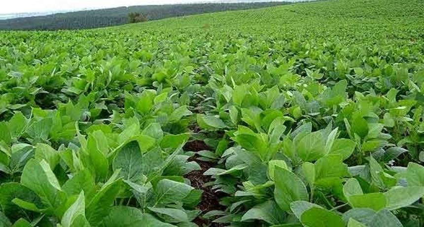 """El 84 por ciento de los cultivos entrerrianos registra un """"buen estado"""" a pesar de las lluvias"""