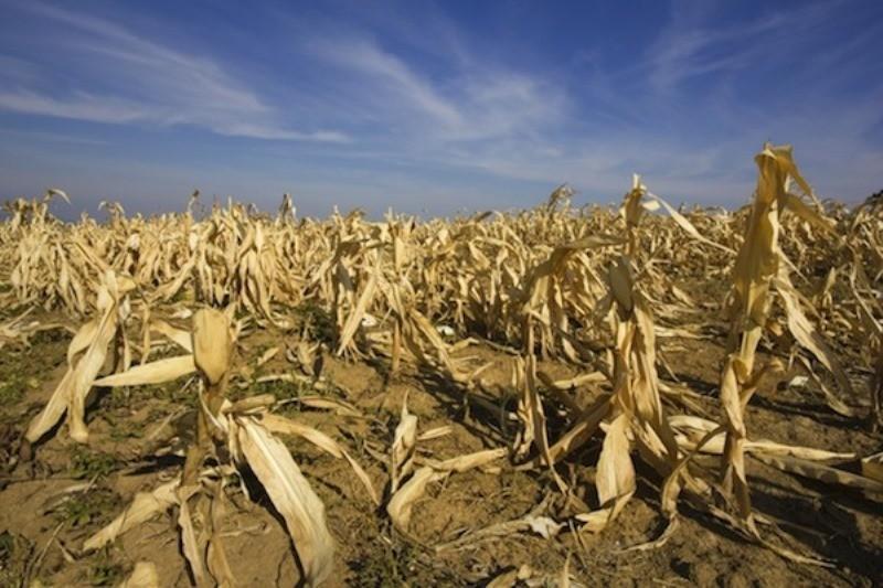 El campo solicitará que se declare en emergencia al sector por la sequía