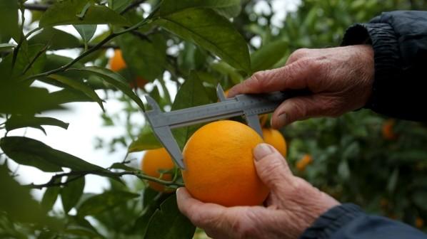 Alianza del INTA y Coca-Cola para favorecer la producción citrícola